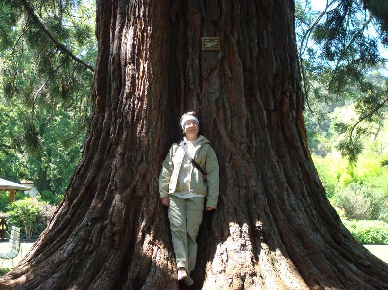 0049_Redwood_l